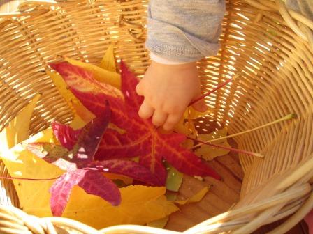 Juguem amb fulles de colors